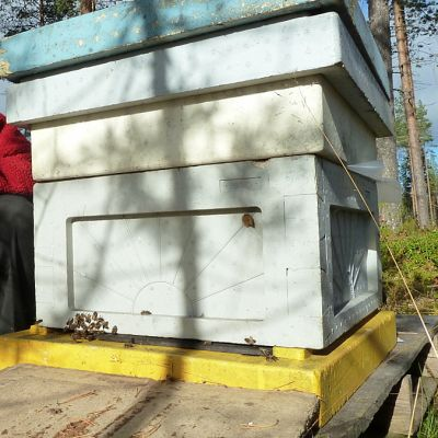 Hannu Luukinen Pohjolan mehiläishoitajien puheenjohtaja