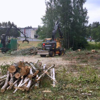 Pellonlaidalta on kaadettu puita