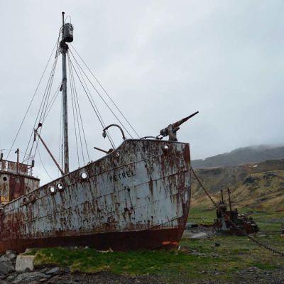 Ruostunut valaanpyyntialus Grytvikenin rannalla.