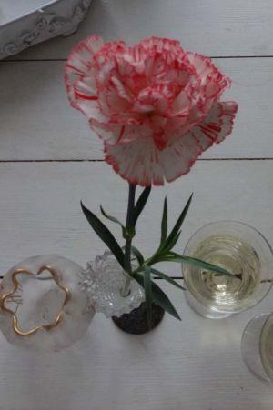 En ljusröd nejlika och två glas med champagne.