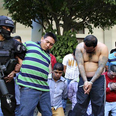 Poliisi pidättää jengiläisiä.