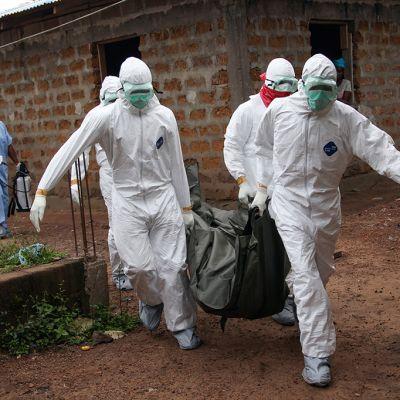 Liberialaiset hoitajat kantavat ebolaan menehtynyttä uhria Monrovian ulkopuolella, Liberiassa 6. elokuuta 2014.
