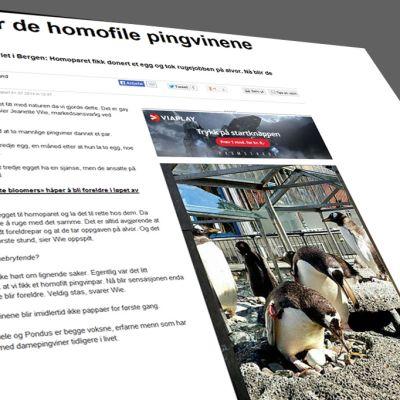 Kuvakaappaus Bergens Avisenin nettisivuilta jutusta, joka käisttelee aihetta.