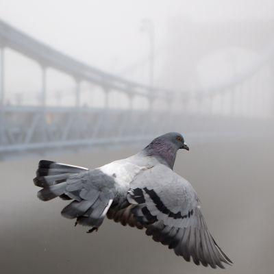 Pulu lentää sumuisessa Varsovassa syysaamuna.