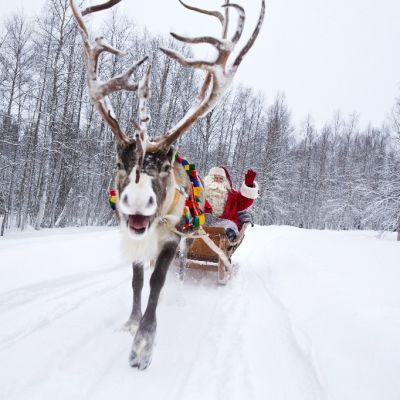 Joulupukki poron pulkassa lumisella tiellä.