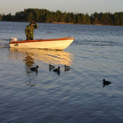 Jägare i båt försöker locka till sig fåglar med vettar, det vill säga plastfåglar, som liknar knipor.