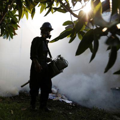 Terveysviranomaiset torjuivat denguekuumeen ja zikaviruksen leviämistä asuinalueella Banda Acehissa, Indonesiassa 1. syyskuuta 2016.