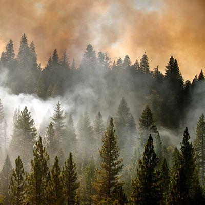 Kalifornian metäspalo.
