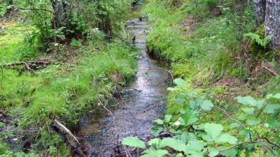 Ett vattendrag.