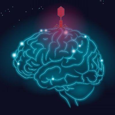 Piirroskuva aivoihin iskevistä viruksista.