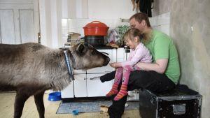 Liten flicka sitter i sin pappas knä i köket och matar en tam ren med knäckebröd.