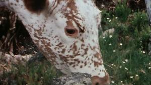 En ko.
