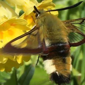 Två bilder på insekt och gul blomma.