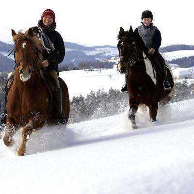 Ratsukkoja lumessa.