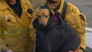 Hund räddades ur flod i USA