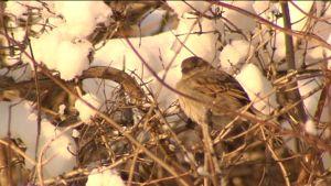 vinterfågel i träd