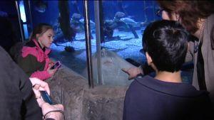 fascinerade besökare på akvariet Sealife i Helsingfors