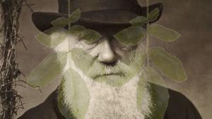 Charles Darwinin valokuva ja sen edessä kaksi himmeää lehteä