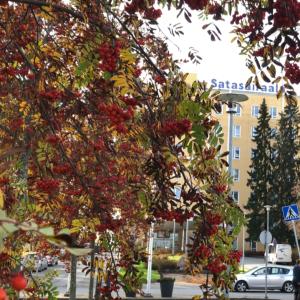 Keltainen sairaalarakennus. Edustalla pihlajapuu.