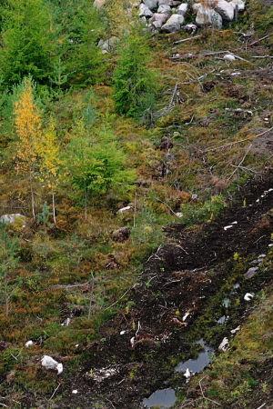 Metsänhakkuualue.