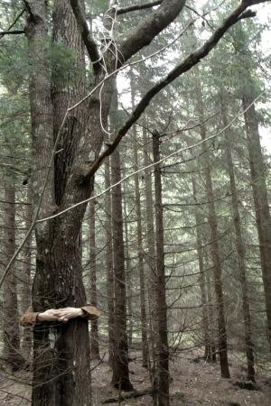 Nanna halaa puuta