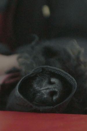Mustan koiran kuono lähikuvassa