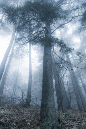 Valo siilautuu puiden lävitse syksyisessä metsässä.
