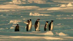 Avara luonto: Koskematon Etelämanner