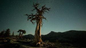 Avara luonto: Amerikan kansallispuistot. Yömaisema ja tähtitaivas.