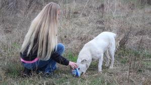 Sini Isaksson syöttää kulkukoiraa pellolla Romaniassa