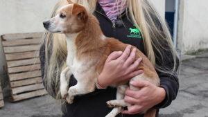 Pieni koira vaalepitkähiuksisen naisen sylissä Romaniassa