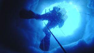 dykare i ishål i antarktis