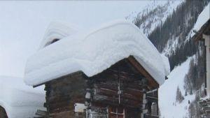 Tjockt snötäcke på alphus i Blatten i Schweiz