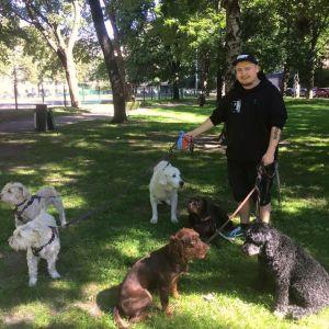 Tim Leham på promenad med fyrfota vänner från hunddagiset All Fur Dogz.