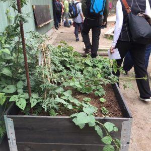 Odlingen en viktig del av I Ur och Skur-daghemmets verksamhet.