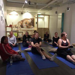 Kattcafé i Helsingfors 2015. Yoga.