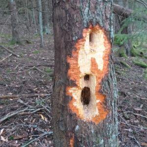Ett hål i en trädstam