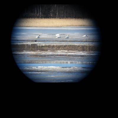 Bilden från en tubkikare
