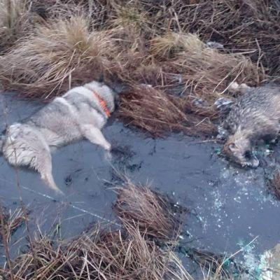 Djur dog av stöt från trasig elkabel