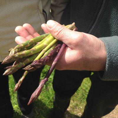 Nuasjärven parsa on erityisen makea ja mehukas.