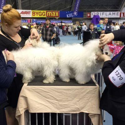 Koirien trimmausta