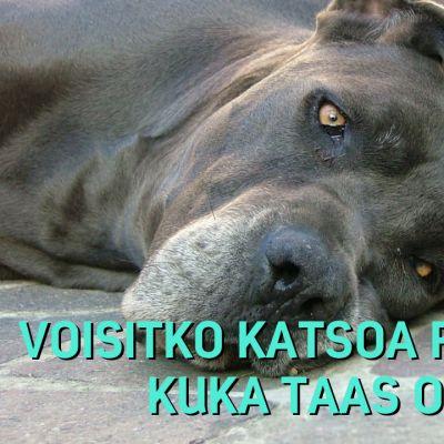 väsynyt koira ja tekstiä
