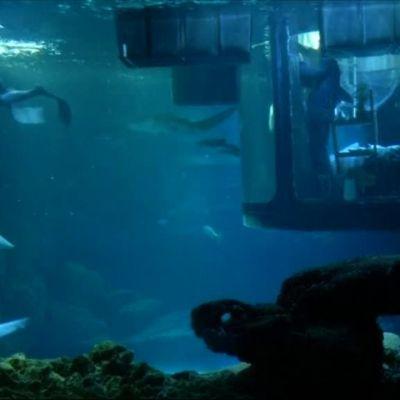 Uutisvideot: Pariisissa voi yöpyä haiden keskellä