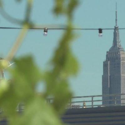 Uutisvideot: Viininviljelyä New Yorkissa