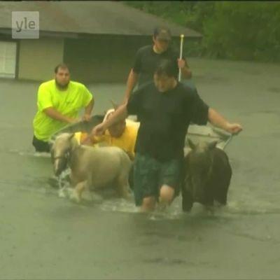 Uutisvideot: Tulvat yllättivät Louisianan