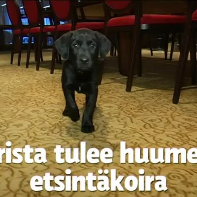 Yle Uutiset Lounais-Suomi: Lounais-Suomen poliisilaitos sai koiranpennun lahjoituksena