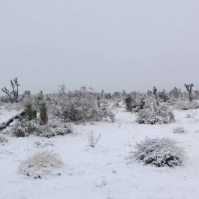 Joulunpyhät toivat lumipeitteen Etelä-Kalifornian kuiviin autiomaihin
