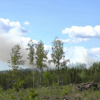 Metsäpaloa sammutetaan Sastamalassa