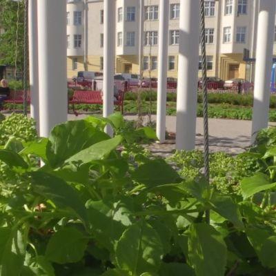 """Kaupunkipuistotutkija kehottaa arvostamaan maaperää: """"Jos äitimaan kanssa sössitään, heimo joutuu muuttamaan muualle"""""""