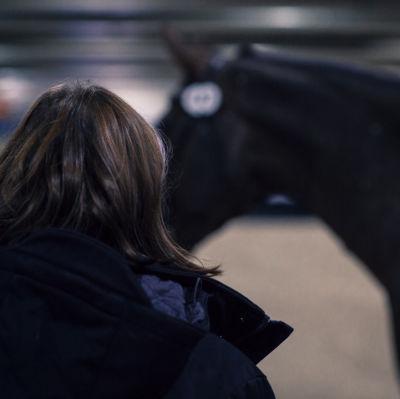 eläinlääkäri arvioi hevosta